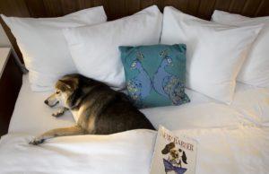 A dog sleeping at Alfond Inn