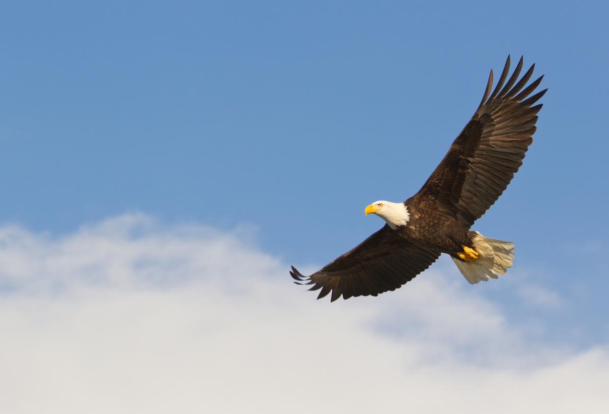 Birding in montana